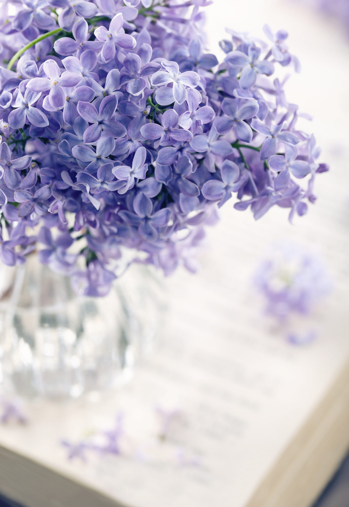 Lilac flowers in a vase on top of a desk